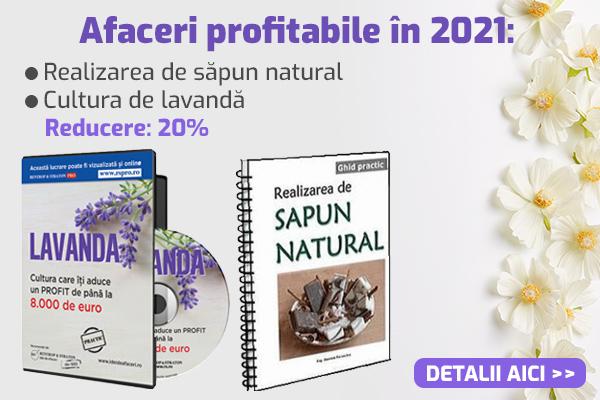Afaceri profitabile in 2021: Lavanda + sapun natural