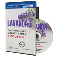 Lavanda, cultura care iti aduce minimum 8.000 de euro profit
