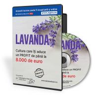 Lavanda cultura care iti aduce minimum 8 000 de euro profit